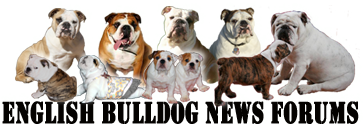 English Bulldog News ~Forums~ - Powered by vBulletin
