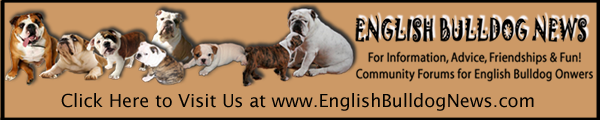 Visit English Bulldog News Forums for Information, Friendship & Fun!