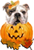 Happy Bully-Ween!!!